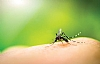 Using Smell to Shoo Disease- Carrying Mosquitos Away